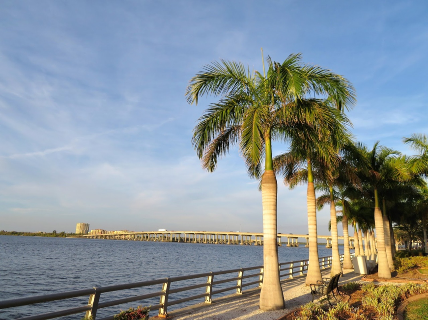 Palm trees along a lake in Bradenton, Florida