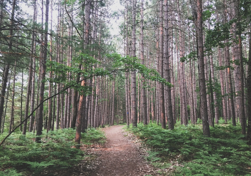 A forest of trees surround a dirt path in Newaygo, Michigan